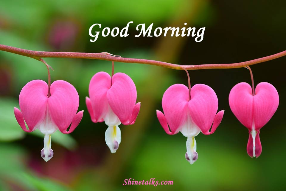 Good Morning 2020 Wishes Quotes Messages Pics Hd Images Download