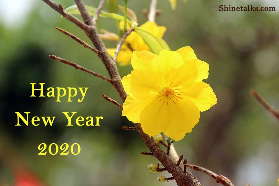 Best New Year Whatsapp and Facebook Status