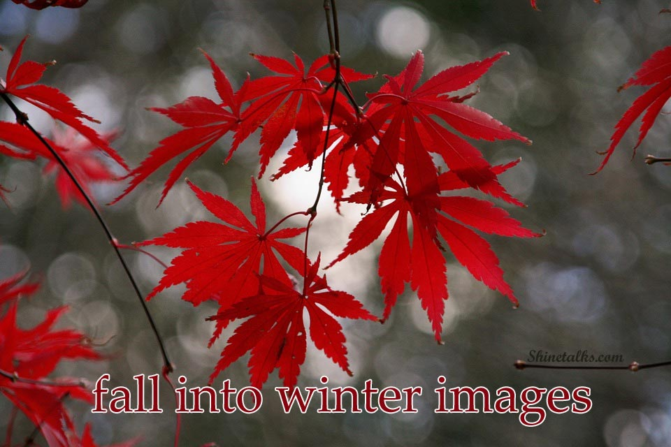 winter pictures with captions
