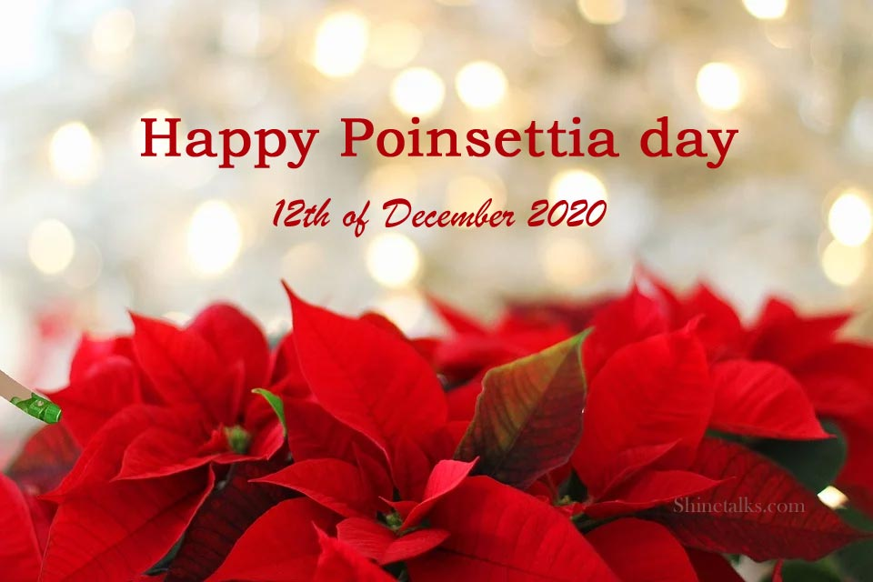 Poinsettia day 12th of December 2020